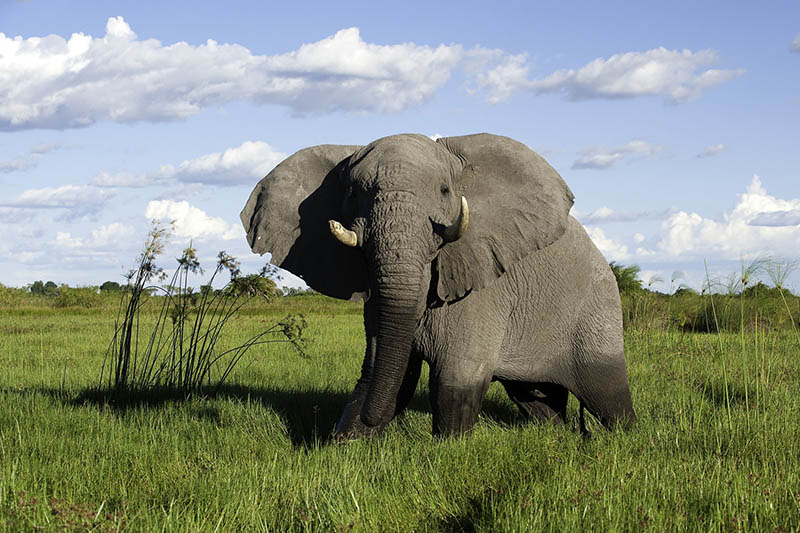 botswana-to-seychelles-holiday-okavango-delta-packages-botswana-destinations-journey-in-style-southern-africa-elephant