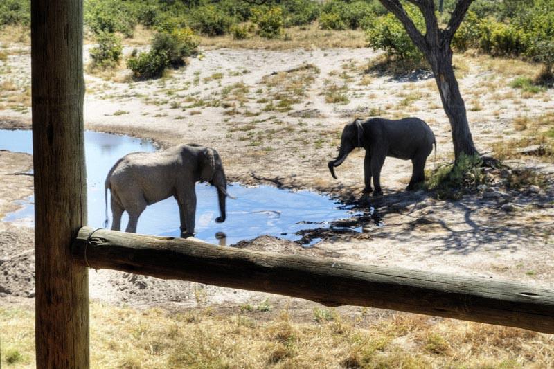 classic-botswana-luxury-linyanti-and-savuti-packages-botswana-destinations-journey-in-style-southern-africa-elephants-water-hole