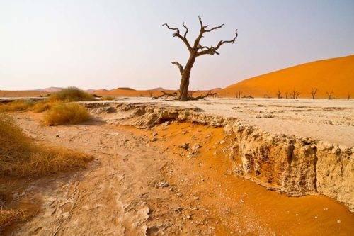 desert homestead lodge n