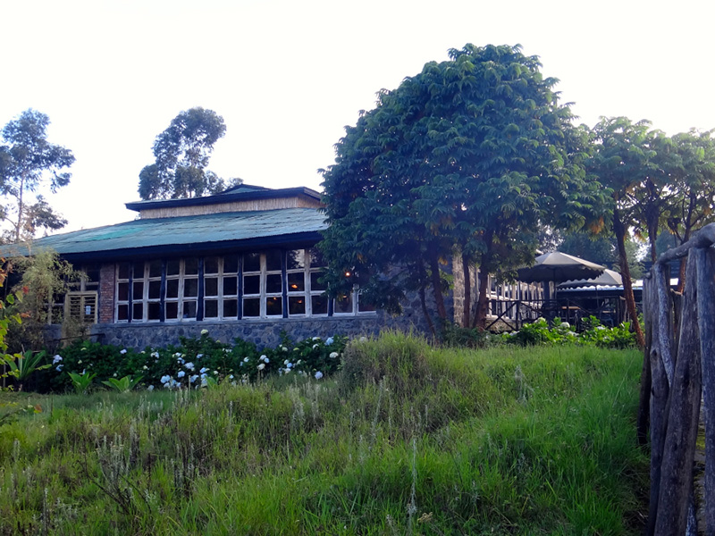 mountain gorilla view lodge - parc-national-des-volcans-rwanda-journey-in-style